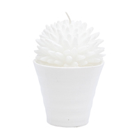 Candle Cactus, White