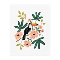 Plansch, Toucan