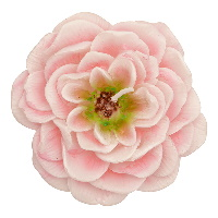 Candle Rose, Pale pink set of 2